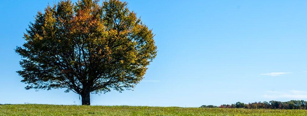 Castine Maine Tree