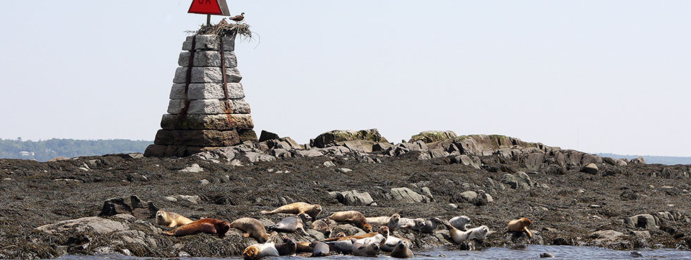 Seals and Ospreys